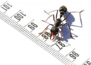 owady w domu